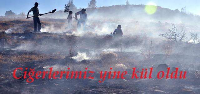 Yangınında 13 Hektar Orman Yok Oldu