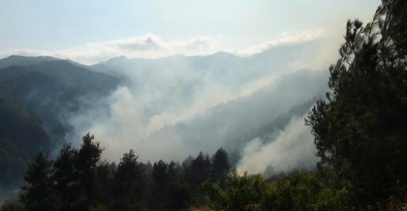 SON DAKİKA! Kahramanmaraş'ta Orman Yangını!