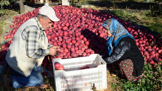 Kahramanmaraş, Göksun ,Ortadoğu,KSÜ Göksun MYO,Organik Tarım Bölüm Başkanı , Selma Boyacı