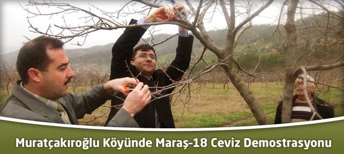 Muratçakıroğlu Köyünde Maraş–18 Ceviz Demostrasyonu