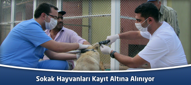 Sokak Hayvanları Kayıt Altına Alınıyor
