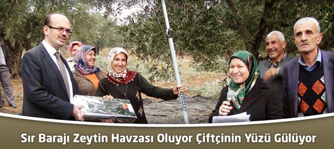 Sır Barajı Zeytin Havzası Oluyor Çiftçinin Yüzü Gülüyor