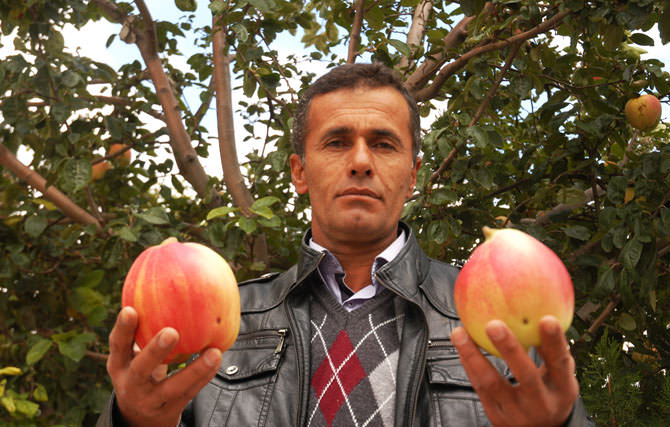 Melez Meyve ELVA 3