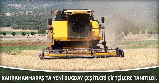 Kahramanmaraş'ta Yeni buğday çeşitleri çiftçilere tanıtıldı.