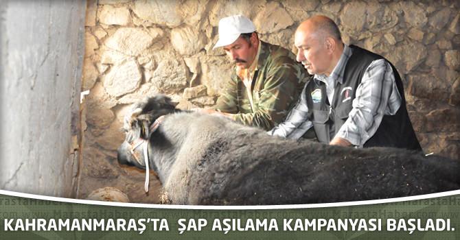 Kahramanmaraş'ta şap aşılama kampanyası başladı.