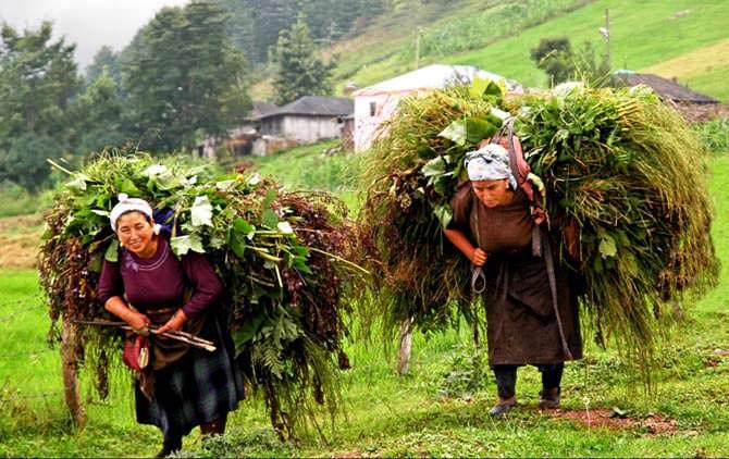 tarım ve insan fotoğraf yarışması (3)