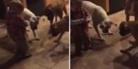 Lazerle köpekleri çıldırtan bebeğin sevinci