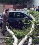 Kahramanmaraş'ta Çınar Ağacı Seyir Halinde Aracın Üstüne Düştü!