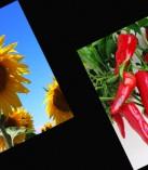 Türkiye Tarım Sektörü Kahramanmaraş'ta Buluşuyor…