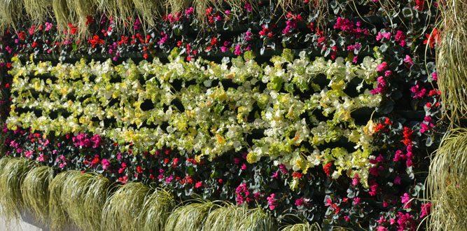 Siklamen'ler Çiçek Açtı