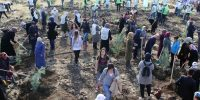 Kahramanmaraş'ta 7'den 77'ye herkes Fidan Dikti
