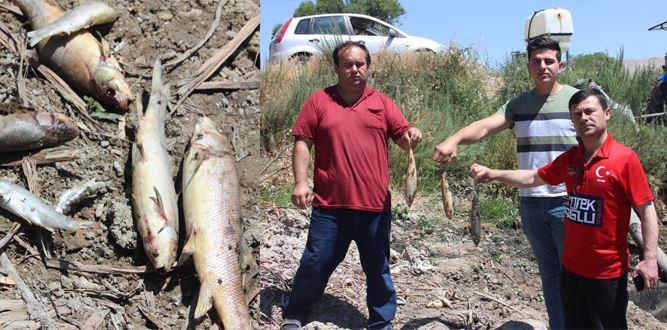 Afşin'de ki toplu Balık ölümleri korkutuyor!