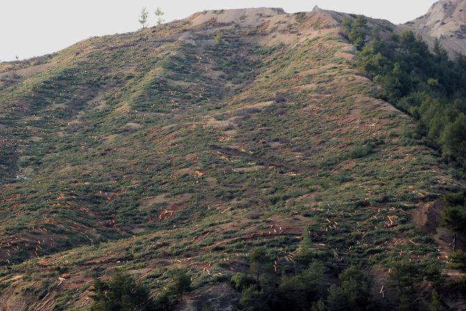 Kahramanmaraş Belediyesi'nden Kesilen Ağaçlar için Açıklama