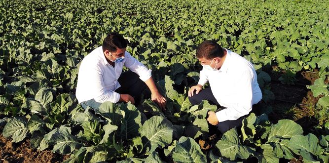 Türkoğlu Tarım Ürünlerine yeni Çeşitler Kazandırıyor