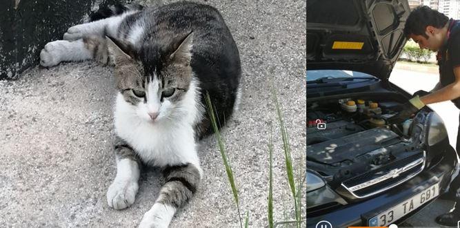 Motor Kaputuna Sıkışan Kedi Nasıl Kurtarıldı?